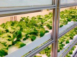 日本アドバンストアグリ、植物工場向け「3波長型ワイドバンドLED蛍光管」の販売を開始