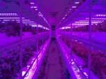 パンメーカーが昭和電工の植物工場ノウハウを導入・電気代30%カットを実現