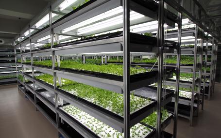 20130905モンゴル植物工場