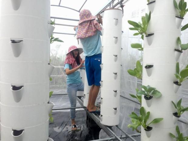 TOEFLテストと国際教育交流のCIEEが台湾で超短期農業ボランティアを開催