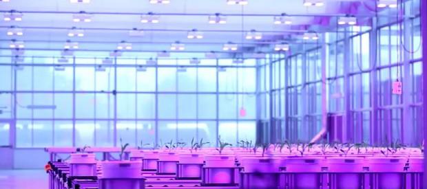 ネブラスカ大学、最先端の植物工場にて研究スピードを加速