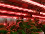 植物工場による生産・販売事業からの撤退、今後はプラント開発に集中
