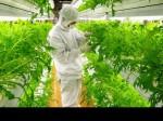 国内最大規模の植物工場施設の運営とライセンス事業を開始