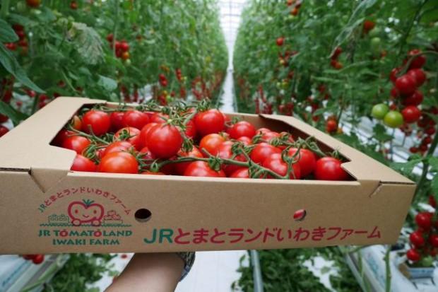 JR東日本グループ、太陽光利用型植物工場トマトを様々なメニューで採用。六次産業化による地域活性化も