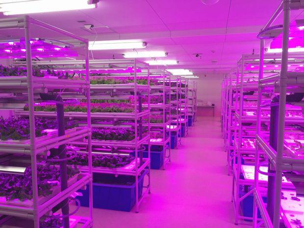 キーストーン、障がい者就労支援のための植物工場設備を導入