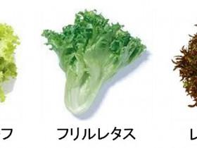日本ガス、液化天然ガスLNGの冷熱を利用した植物工場を建設