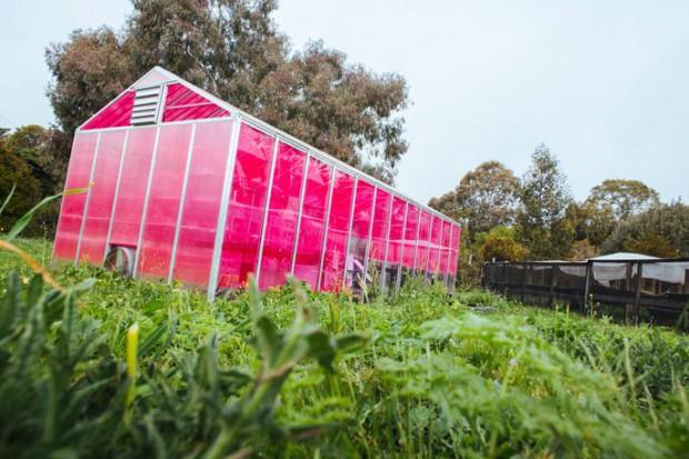 世界市場でも注目される特殊発電フィルムの開発。植物工場・施設園芸での普及を目指す