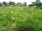 ノエビアグループ×立命館大学、土壌肥沃度とオーガニック植物の収穫量や品質の関係性を解析