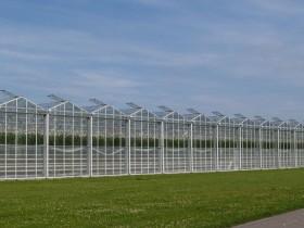 UAE初・最新の太陽光利用型植物工場ベンチャー。来年夏にトマトを初収穫