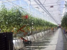 カナダの植物工場市場/国内における施設面積1335ha・市場規模1568億円にて主力産業の一つ