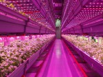 米国・中国の2カ国が協力、植物工場など新技術の研究開発や農業投資を加速