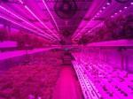 米国ユタ州でも植物工場ベンチャーが設立。地産地消ブームを背景に、コンテナ型設備の販売を目指す