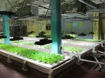 米国の都市型・植物工場NPO「フード・チェイン」がローカル・フードシステム確立のため30万ドルの資金調達を開始