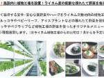 イオンモール沖縄、植物工場にて生産した野菜販売コーナーを整備