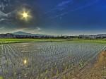 イオンアグリが埼玉羽生農場にて大規模コメ生産を開始