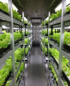失敗しない植物工場セミナー「設備メーカーの技術・ノウハウを全て開示」