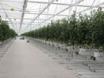 植物工場向け環境制御システム開発のホーヘンドールンがメキシコにトレーニングセンター開設