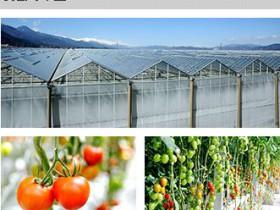 エア・ウォーターによる木質バイオマス設備の導入。植物工場栽培にも利用