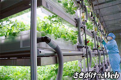 秋田でも植物工場にてアイスプラントの通年栽培を実現。最低でも日産500パックを出荷する計画:横手精工