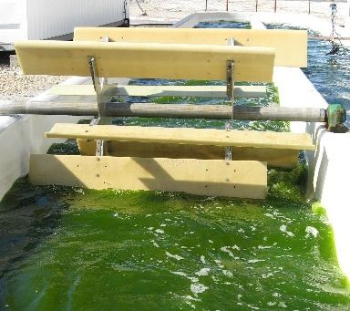 宮城県石巻市に藻類培養施設が建設、健康食品など機能性素材の生産へ