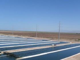 DIC子会社が米国に藻類(スピルリナ)培養プラントを建設、天然由来の青色着色料トップメーカーへ