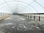 ベトナムにてイスラエル発祥の最新エコ技術を導入。巨大温室ハウスにてエビ養殖へ