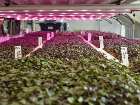都市部の食料問題と食育を解決。米国NYなど都市部で拡大するアクアポニクス・地産地消モデル