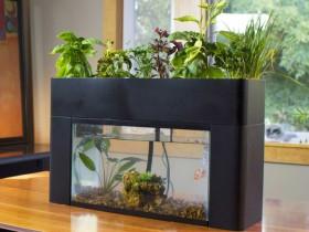 家庭に、オフィスに生態系を。家庭用アクアポニックス「アクアスプラウト」予約販売開始