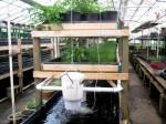 魚の養殖と野菜の水耕栽培を融合したアクアポニクスについて