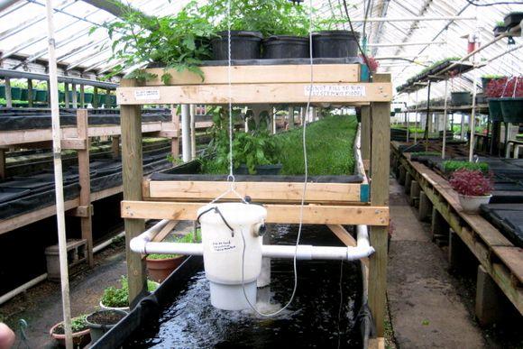 魚の養殖と野菜の水耕栽培を一体化したアクアポニクス