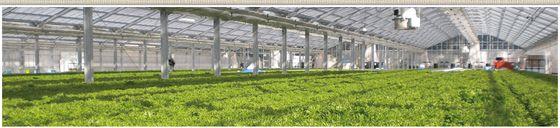 大成建設などの出資を受けて設立したグランパ/太陽光利用型の栽培技術を改良し、生産効率の高いドーム型・回転方式の工場を開発