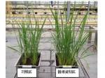 アサヒグループHDなど、酵母副産物を用いた農業生産システムを開発。生産性工場と持続可能な社会を実現