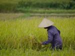 シンポジウム情報「モンスーンアジアにおける農業環境研究の挑戦」