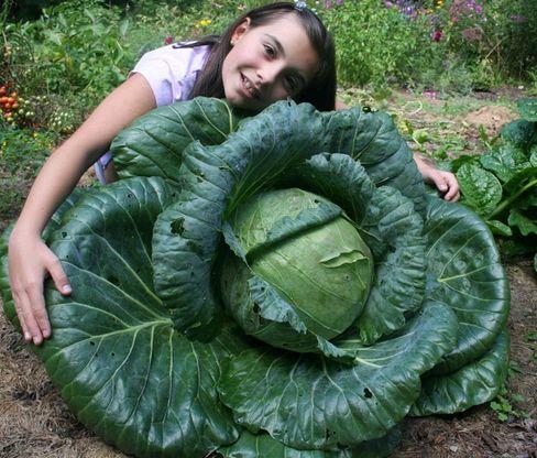 巨大キャベツを作ろう!米国の食育・農業プロジェクト:Bonnie Plants(小学3年生の教育プログラム)