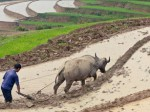出光クレジットなど、カンボジアで農業分野向け融資・個品割賦事業を開始