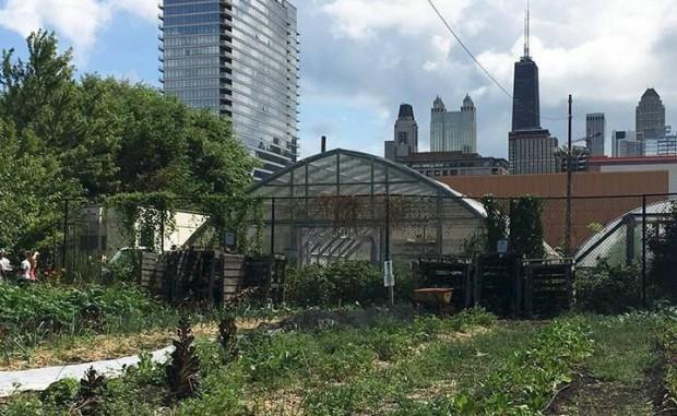 シカゴの都市型農業、米国農務省による100万ドル以上の補助支援を受けて農地整備・人材育成へ