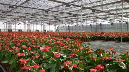 住友化学、中国大連にて高機能農業用ハウスフィルム製造設備を増強