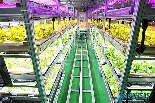 韓国での植物工場建設が相次ぐ。国内のレタス市場や今後の研究に関するまとめ