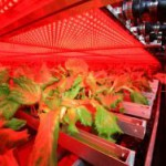 事業破綻したLED型植物工場のコスモファーム江刺、補助金返還の声が改めた高まる