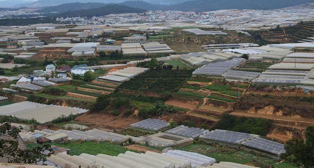 ベトナム市場を狙った日系企業による植物工場ビジネス