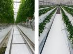 大日本印刷、施設園芸・植物工場向けの反射保湿フィルムを開発
