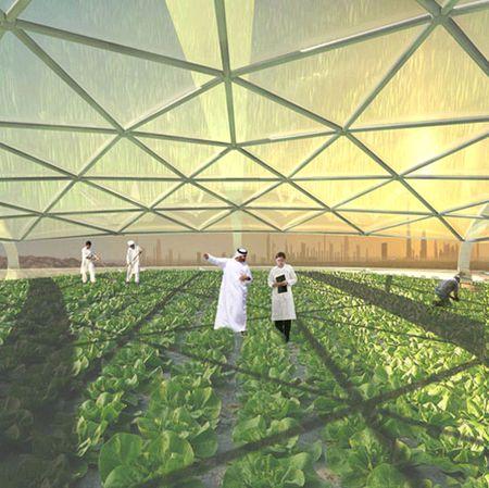 垂直式の野菜栽培ファーム(ドバイの植物工場)