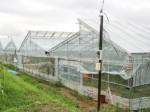 オムロンベンチャーズ、有機栽培・エコグリーンハウス開発企業 「オーガニックnico」へ出資