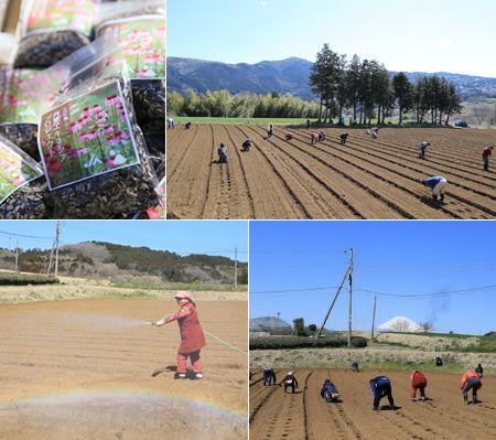 耕作放棄地にて太陽光発電「ソーラーシェアリング」と薬用植物としても利用されるエキナセアの無農薬栽培を開始