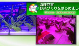 遠藤商事、LED光源を採用した大規模型植物工場による生産開始