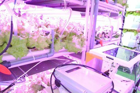 イーソルの環境モニタリングシステムが、LED植物工場で稼働開始