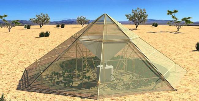 エチオピアの家族経営農家を支援。サステナブル農法「水滴収集グリーンハウス」を提案