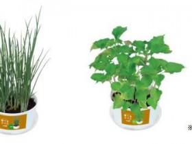 ファミリーマート、サカタのタネなどと共同開発した家庭栽培キット「育てるヤクミ」を発売