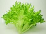 山口大ベンチャーと地元小売スーパーが連携し、植物工場による生産会社を設立