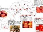 高知が発祥の地・冬が旬の「フルーツトマト」ユニークな冬春トマトが11月より順次出荷開始
